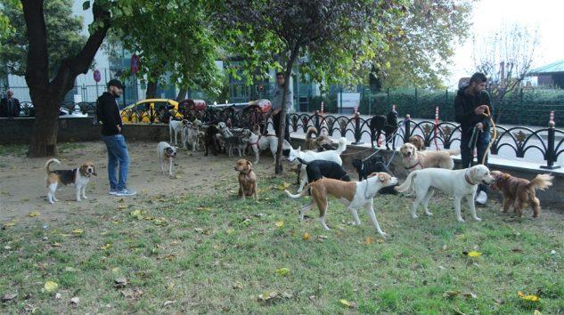 Köpekleri gezdiriyor, ayda 5-6 bin lira kazanıyorlar…